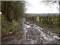 ST5658 : Stratford Lane by Neil Owen