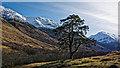 NN1271 : Pine tree in Glen Nevis by Peter Moore