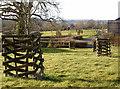ST5757 : Tough tree turrets by Neil Owen