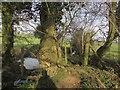 ST6460 : In a bridleway north of Barrow Vale by Derek Harper