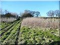 SE0321 : Overgrown footpath near Spout Field Farm, Sowerby by Humphrey Bolton