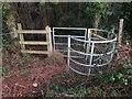 ST6562 : Entering Common Wood by Derek Harper