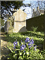 ST6665 : Early flowers in the churchyard by Neil Owen