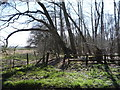 TL0133 : Footpath beside Priestley Plantation by JThomas