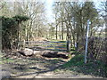 SP9933 : Track (bridleway) into Poorshills Wood by JThomas