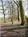 SD8204 : Heaton Park Dell near the Horticultural Centre by David Dixon