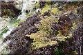 NT2434 : Juniper bush at the Juniper Burn by Jim Barton