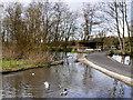 SD4214 : WWT Wetland Centre, Martin Mere by David Dixon
