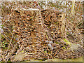 SD7707 : Fungus-Infected Tree Stump by David Dixon