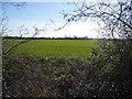 SP9621 : Field in Eaton Bray by David Howard