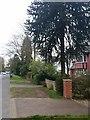 SU8759 : Monkey Puzzle tree, Park Road, Camberley by Rich Tea