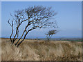 SS2619 : Bursdon Moor south-east of Hartland, Devon by Roger  Kidd