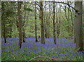 ST6763 : Blue carpet by Neil Owen