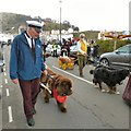SH7882 : Dogs on parade by Gerald England