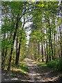 SU8640 : Woodland track leading south from Sandy Lane, Rushmoor by Stefan Czapski
