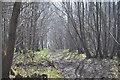 TR1052 : Footpath, Denge Wood by N Chadwick