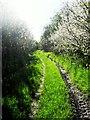 TL4677 : Pingle Lane by Andrea