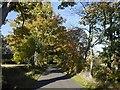 NT7723 : Yellow road, Morebattle by Richard Webb