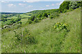 TQ1450 : Chalk grassland, Denbies Hillside by Alan Hunt