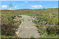 NX3878 : Trail at Glen Trool by Billy McCrorie