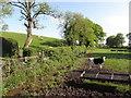 H5259 : Calves, Fernaghandrum / Dunbiggan by Kenneth  Allen