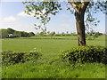 H5260 : Tree, Fernaghandrum by Kenneth  Allen