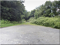 S6145 : Woodland track by Neville Goodman