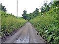 SU9795 : Bottom House Farm Lane by Robin Webster