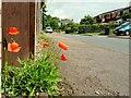 SO6023 : A seasonal weed by Jonathan Billinger