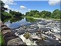 NT5434 : Tweed Weir : Week 26