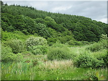 R1613 : Woodland by the River Breanagh by Jonathan Thacker