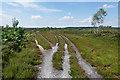 SU9053 : Tracks, Romping Down by Alan Hunt