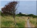 TA2611 : Path and tree near the Pyewipe Mudflats : Week 30
