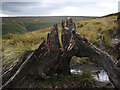 SK1293 : Bog Wood by Stephen Burton