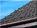 NJ6201 : Spuggie paradise! by Stanley Howe