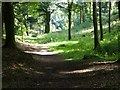 NX8499 : Woodland walk, Drumlanrig Woods by Philip Halling