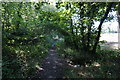 SE3006 : Penistone Rail Trail towards Dodworth by Ian S