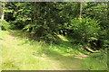 NX8499 : Choice of Trails in Drumlanrig Woods by Billy McCrorie
