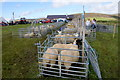 HP6312 : Sheep pens at the Unst Show, Haroldswick by Mike Pennington
