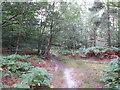 SU9586 : Permissive path waymark on post in Dorney Wood by David Hawgood