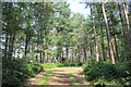 SJ5472 : Path through Delamere Forest by Jeff Buck
