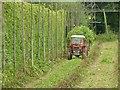 SO6768 : Hop harvest (1) by Alan Murray-Rust