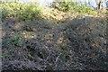 SX4560 : Cutting, Tamar Valley Line by N Chadwick