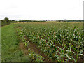 SU2997 : Field edge near Faringdon by Gareth James