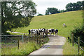 ST7370 : Cattle in the shade near Brook Cottage by Bill Boaden