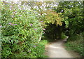 TQ8267 : Berengrave Local Nature Reserve, Rainham by pam fray