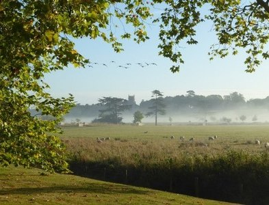 SO8744 : Canada geese and a misty Croome Park by Philip Halling