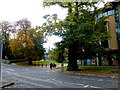 H4572 : Trees at South West College, Omagh by Kenneth  Allen