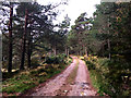 NO4494 : The Glen Tanar track by John Allan