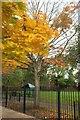 ST5178 : Sycamore, Avonmouth Park by Derek Harper